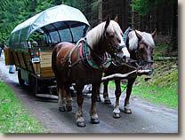 Planwagen- und Kutschfahrten